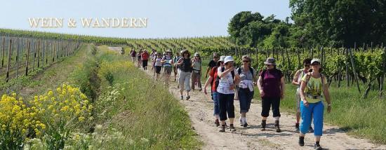 Weinwandern in der Rheinhessischen Toscana